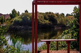 Tule Ponds