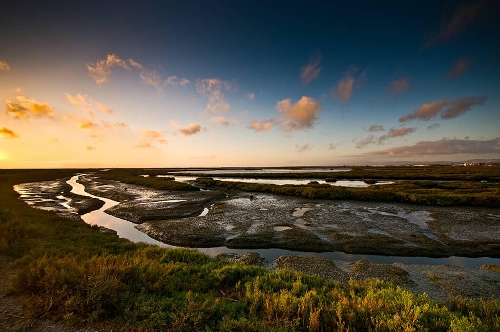 Alternate-Invitation-Background-hayward-shoreline-marsh